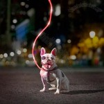 5' Nighttime Pet Leash in 3 Colors