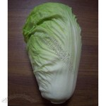 Artificial Chinese Celery Cabbage