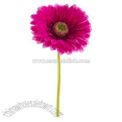 Fuchsia Silk Gerbera Daisy with a 4