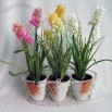 Hyacinth, Set of 3, with Chicken Wire Basket