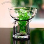 Mushroom Shaped Hydroponic Glass Vase