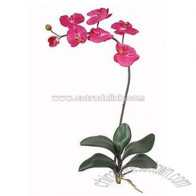 Phalaenopsis Silk Orchid Flower with Leaves (Six Stems) - Beauty