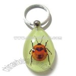 Real Insect Amber Key Chain