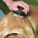 Twist-It Pet Brush